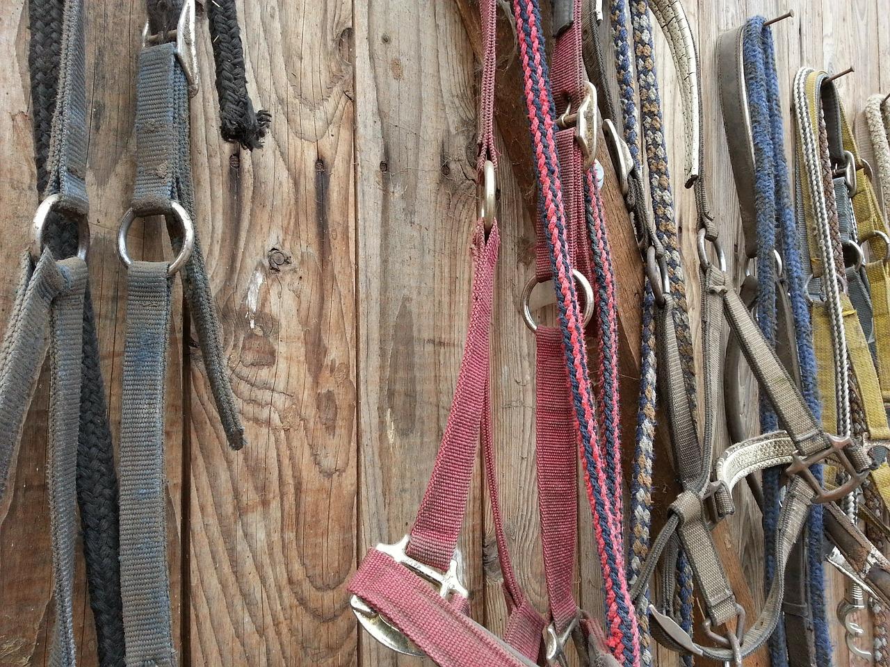 bridle-105062_1280