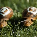 snails-1753611_1280